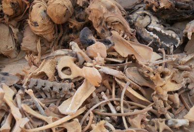 Chantier de fouille - UMR 7209 Archéozoologie, archéobotanique : sociétés, pratiques et environnement