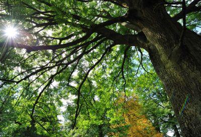 Arboretum de Chèvreloup © MNHN - FG Grandin