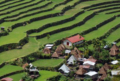 Paysage de rizière © MNHN - A. Druguet